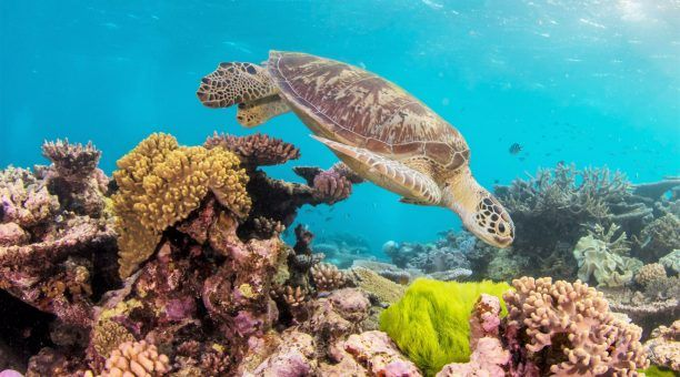 Get up close to green sea turtles