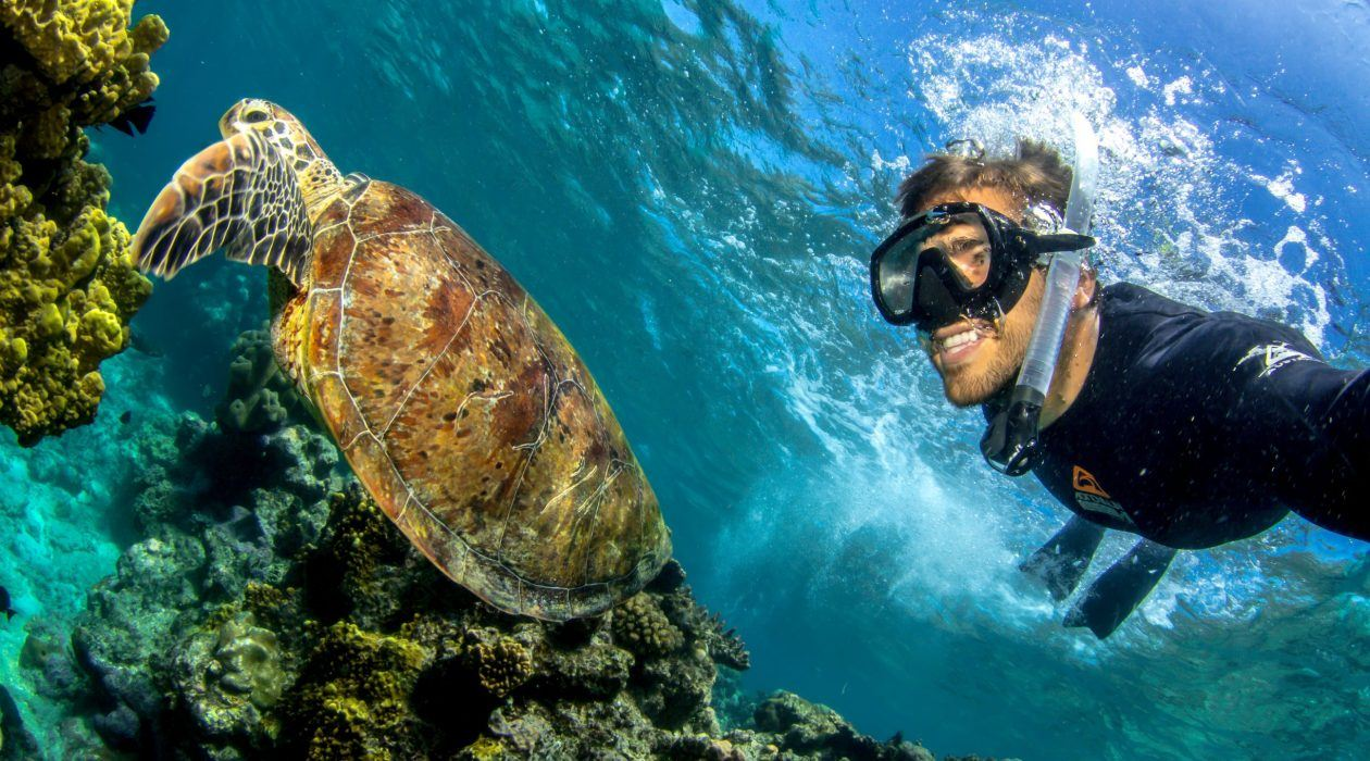 Snorkelling with a Green Sea Turtle
